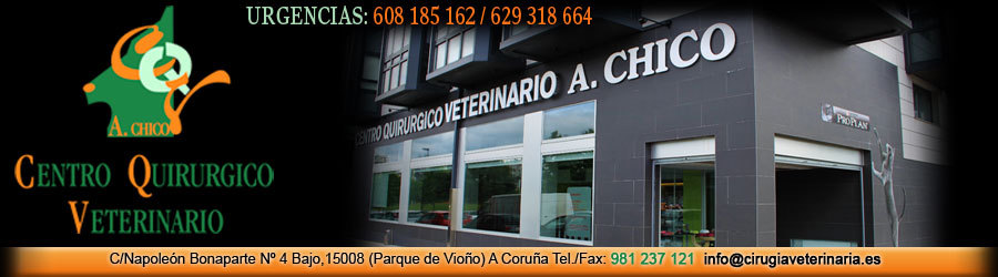 Alfonso chico Veterinario